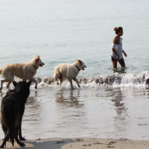 AS-PLAGE-CHIENS-1000