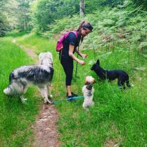 AS-photo-trois-chiens-foret